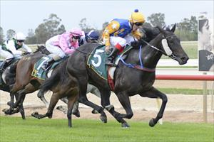 Bet You She Rocks makes it 2 from 3 for Matt Laurie Racing at Echuca on the 22nd April