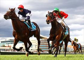 Dominant runs 2nd on debut at Caulfield in April 2012