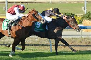 Lamingtons wins the first ever night race at Cranbourne in 2012