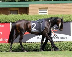 Two Sugars in the mounting yard before her big win at Mornington
