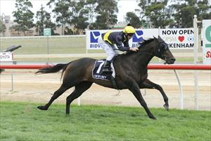 Tigerland make it 3 from 4 with another dominant display on Pakenham Cup Day