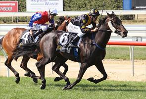 Two Sugars wins the $70,000 Mitavite Summer Challenge on Mornington Cup Day