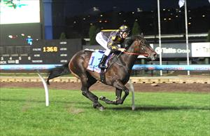 Two Sugars wins at Moonee Valley with Michael Rodd on board